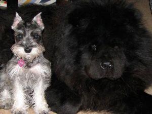 Butch & Sasha